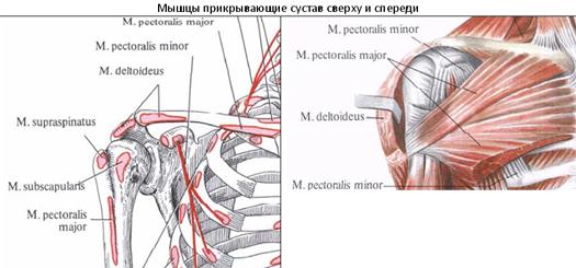 Разрыв четырехглавой мышцы бедра лечение. Повреждение сухожилий