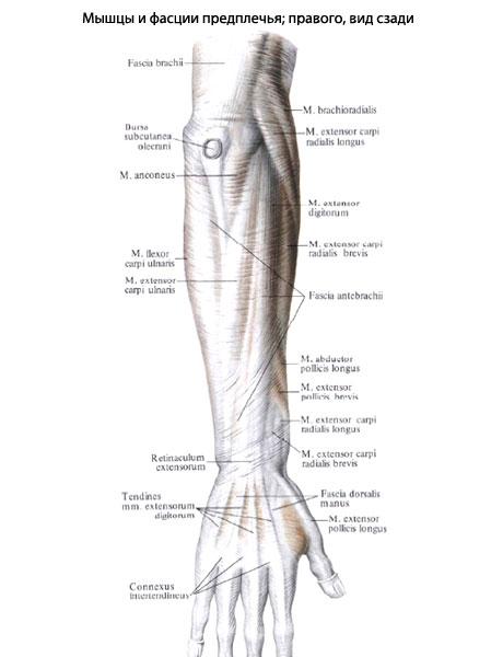 omega shark krém forum