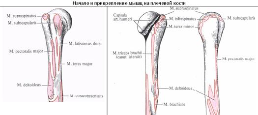 terápiás csípőízületek kezelése