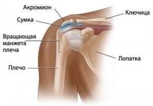 teraflex a vállízület artrózisában