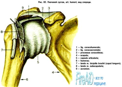 deformáló osteoarthrosis a vállízület ii. fokozatában