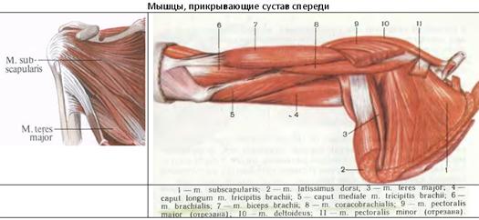 a clavicularis-acromialis ízület artrózisa 2 fok